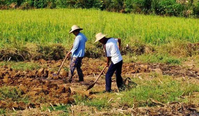刚刚!权威部门明确这一政策,释放农业生产力的重大信号