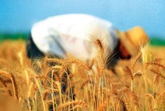 农业部是如何规范农村土地流转的?