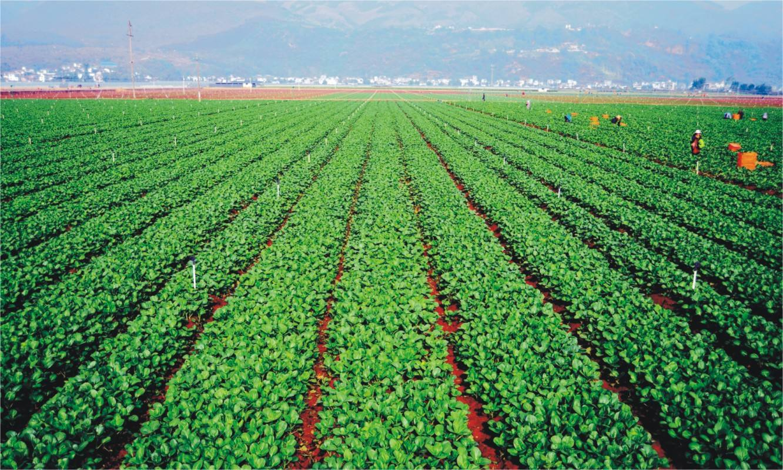 干特色农业需要注意7大坑(每个坑都很关键)
