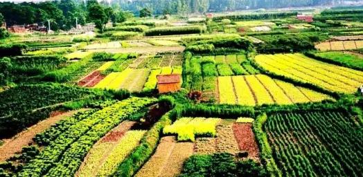 休闲农业用地有哪些限制?懂得这些,才能让你的地发挥更大价值!
