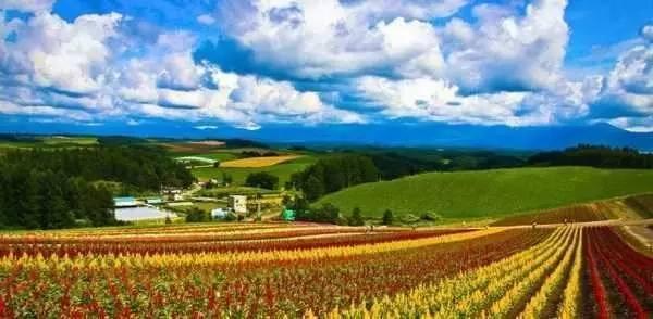 未来农业细分领域9大趋势:你认为哪一个会成真风口