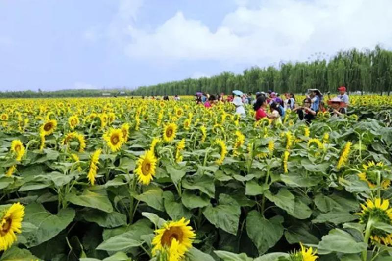 休闲农业,未来10年发展的8个大趋势!