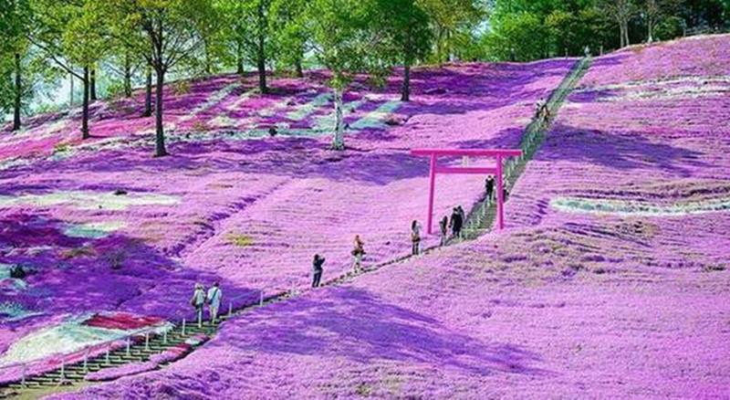 日本休闲农业5大经营策略:产业化、IP打造、营销活动