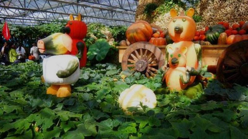 做休闲农庄和家庭农场不能光会种地,还得学会打造农作物景观!