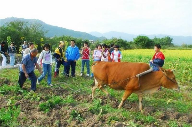农家乐和休闲农庄体验活动设计需要遵循这5个原则!