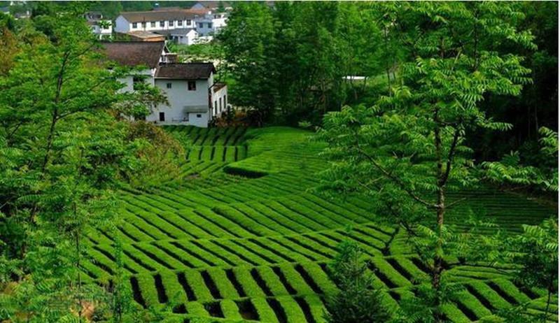 创业小黑板|15大国内外休闲农业模式:创新才能自救