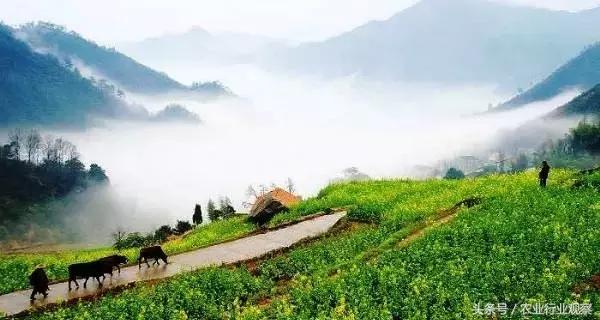如何让休闲农业+乡村旅游+有机农产品销售相结合?