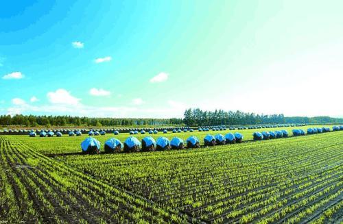 创业小黑板|观光农业:未来农业新爆点