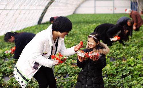 三农日报| 杨国强:碧桂园要进军农业;玩休闲农业要注意4点