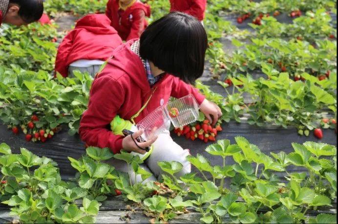 案例|水果行业如何跨界做休闲农业(附7种模式)