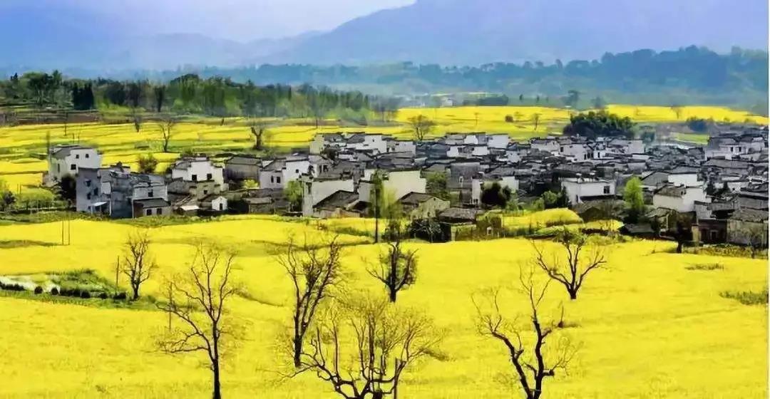深度解析!田园东方、美丽南方、多利农庄靠什么赚钱