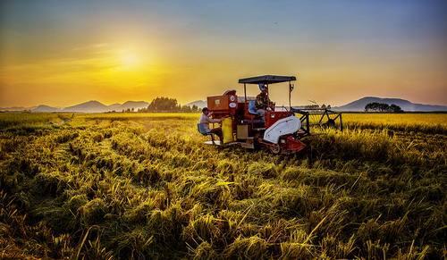 三农日报|京东新玩法:快闪店+农业 ;新商机:生态养殖+休闲农业模式