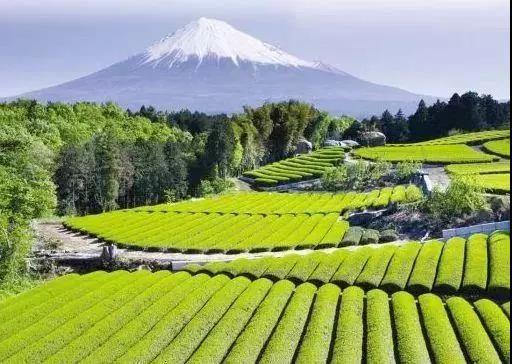 新模式|农业+文旅,为什么日本的农产品可以走高端路线!