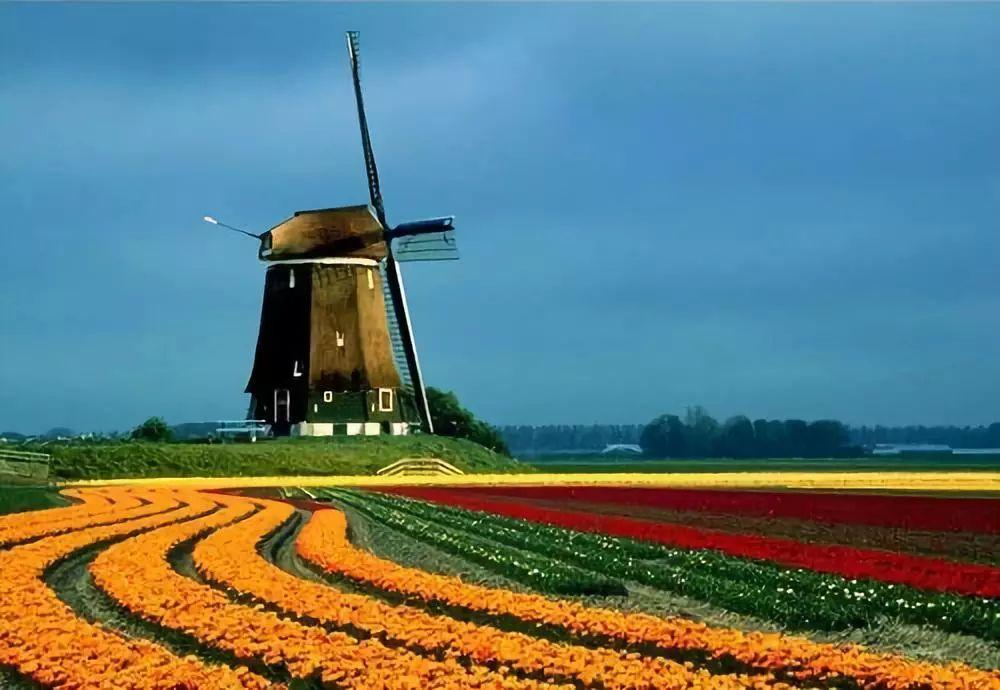 行业分析|荷兰农业模式在中国可行吗?