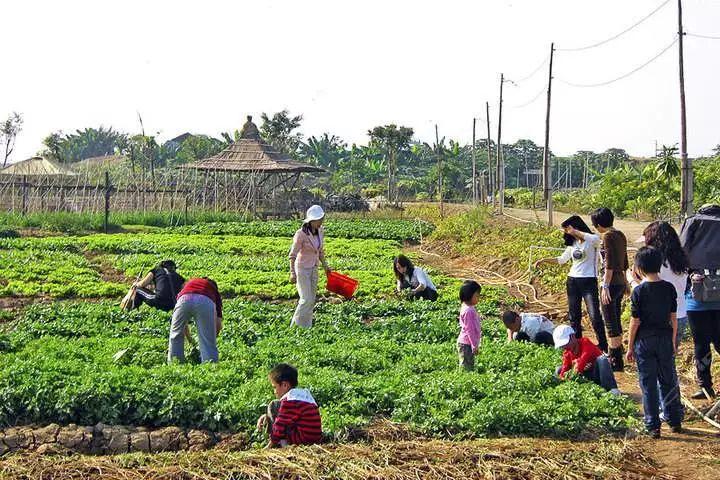 商业分析|为什么传统农业喜欢嫁接休闲农业