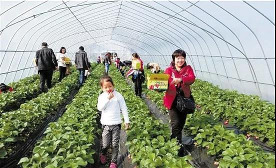 三农日报|基石资本董事长:高估值的农业股不值得追;业内人士:农民是休闲农业的主体