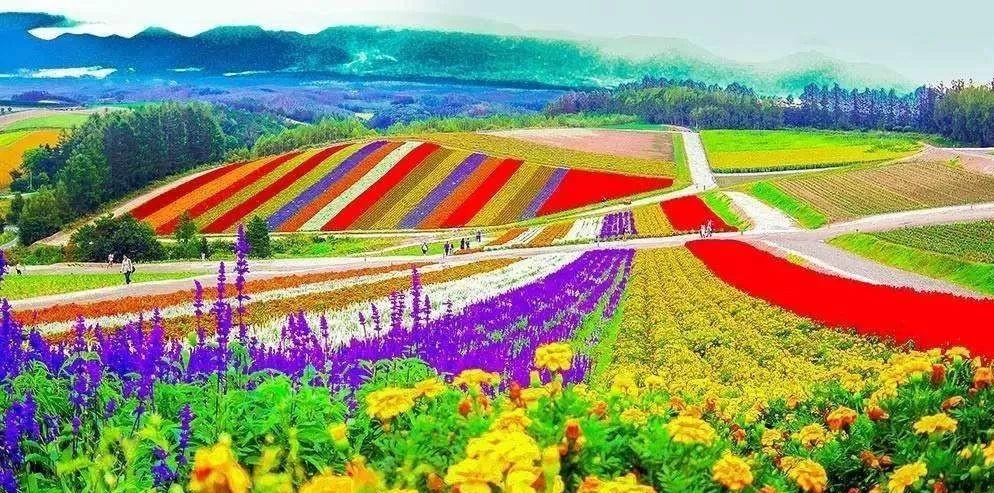 行业分析|中国休闲农业发展现状、问题与对策