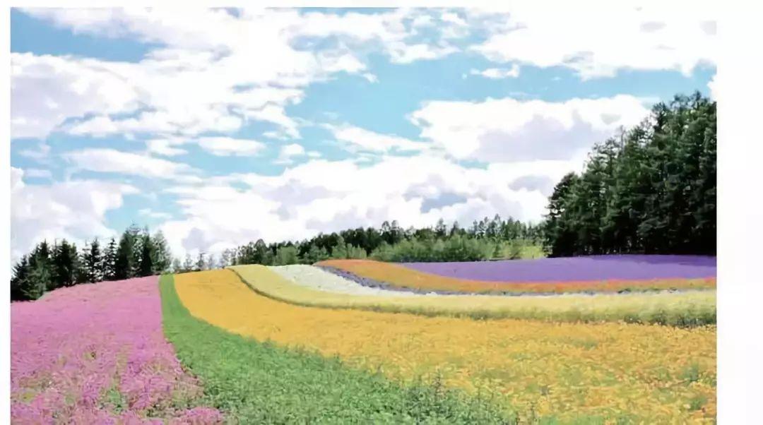 案例|日本富田农场:一个年销售额过9亿日元的综合体