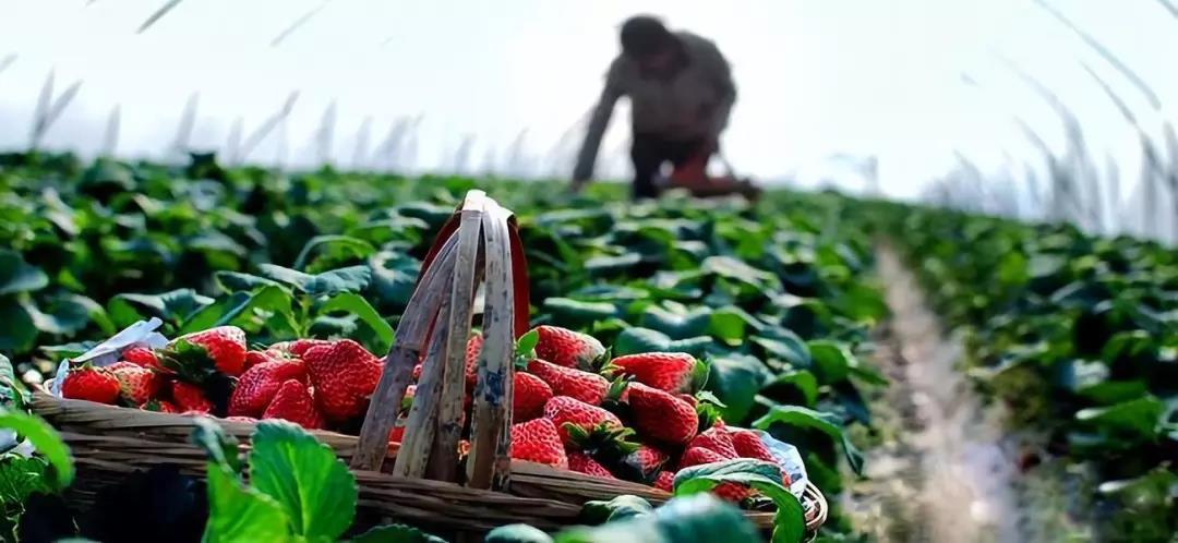 三农日报 法国休闲农业:合作社模式;送餐机器人成餐饮王牌