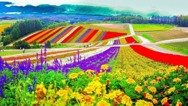 休闲农业与乡村旅游经营模式