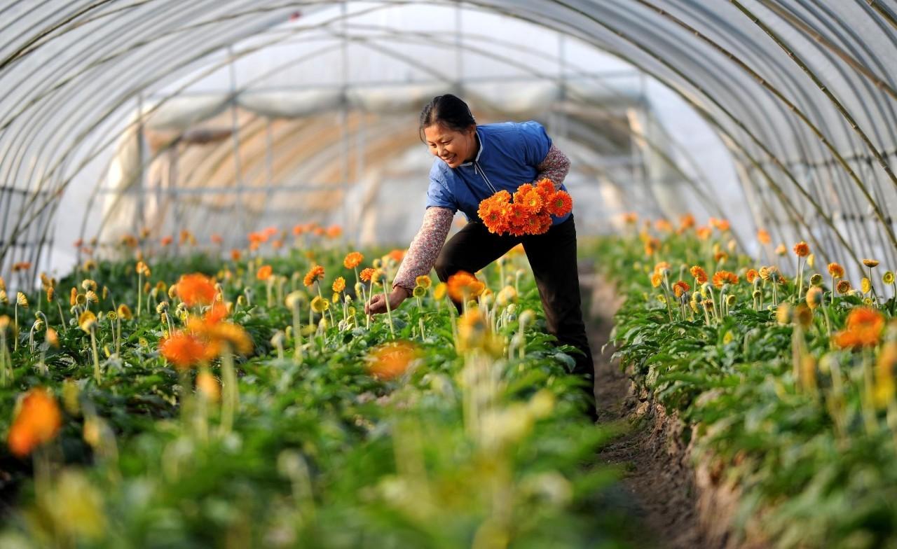 休闲农业都在犯的10大错误,你中招了吗?