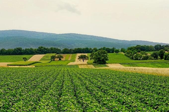 休闲农业运营的10个技巧及100种盈利模式