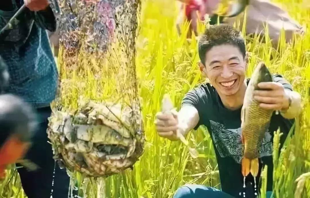 """【新玩法】农业遇上休闲,小作物""""玩""""出大财富"""