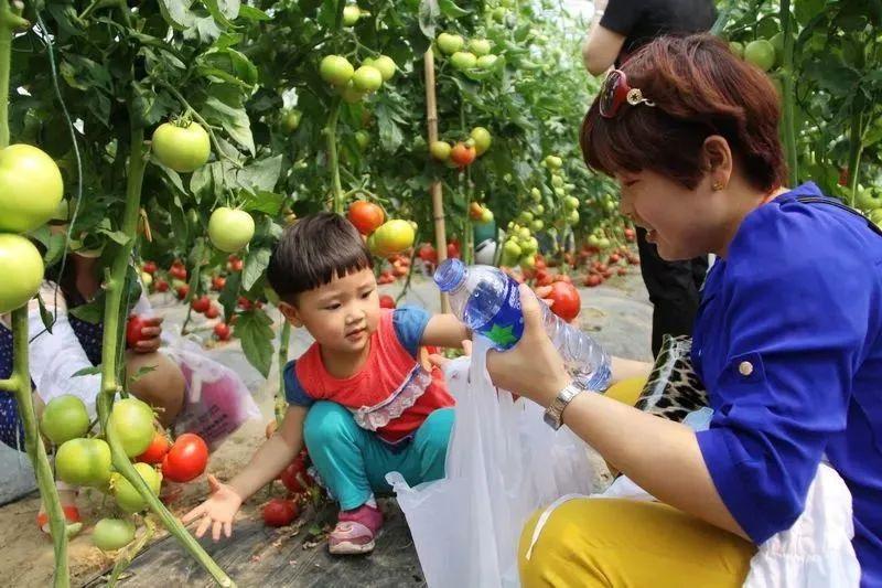【探究】都市农业是什么?又有哪些类型?