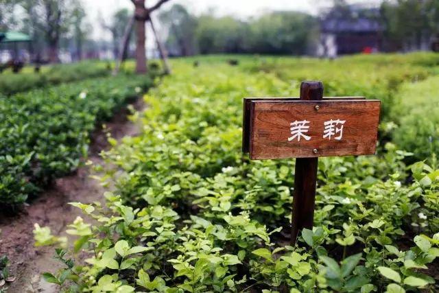【商业模式】田园综合体是农业还是地产,还是旅游呢?