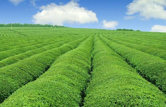 三农日报|我国鼓励资本投资乡村休闲旅游;农业大健康将会是个大趋势