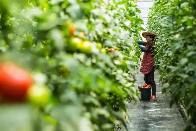【人物故事】宋卫平:做人们向往的农庄,不是圈地,更不是房地产开发