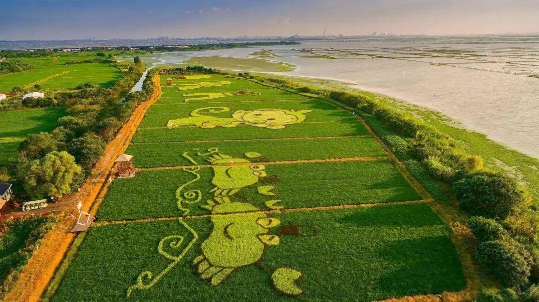 【未来农业】创意农业对于品牌农业打造的竞争力是什么?