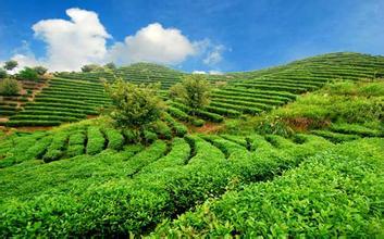 生态农业的发展前景如何?趋势怎样?