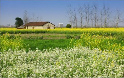 休闲农业十大问题与误区