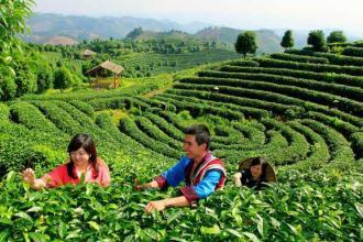 休闲农业已爆发,究竟怎么玩才赚钱?