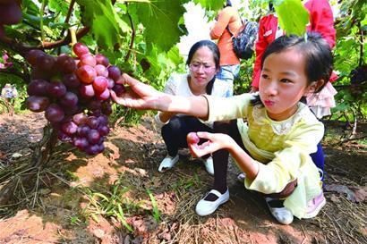 青岛现代农业五年规划:2020年休闲农业总收入将超百亿