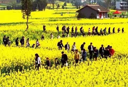 解读休闲农业的7大成功模式,满满的都是套路!