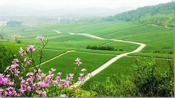 中国农业未来二十年大势,早发现早挣钱 !