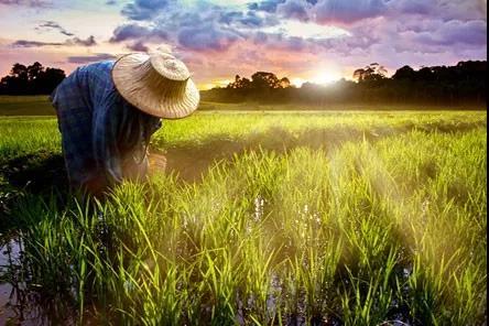 新模式|未来中国农业的方向!