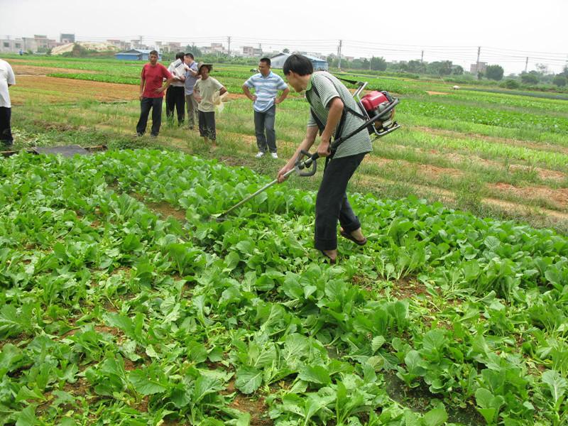 蔬菜选药难?看看新发布的绿色农药名录!