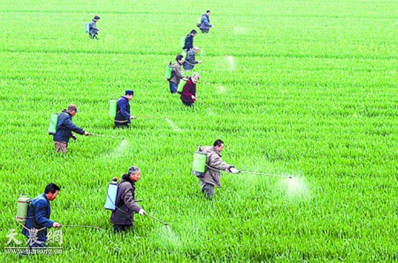 农药 | 农药效果好,配方很重要!