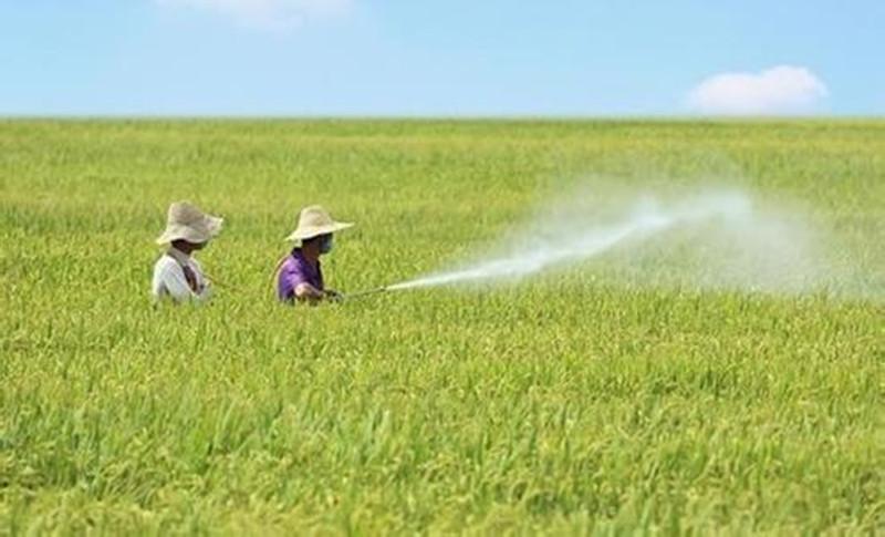 农药与叶面肥混用,这三点一定要谨记,否则危害大了!