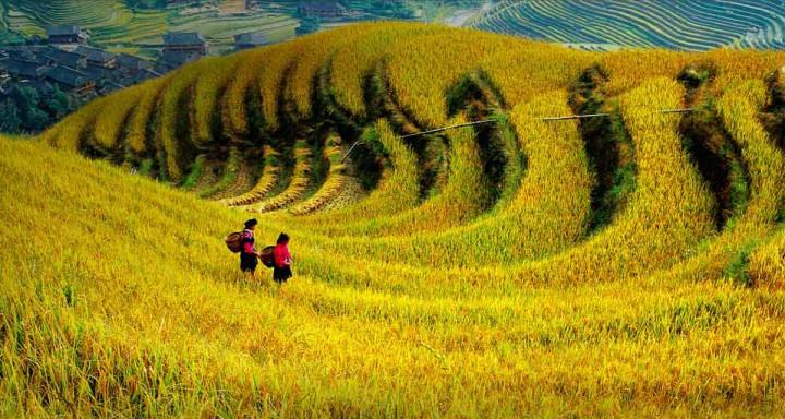 三农日报|乡村振兴或成2018经济工作重点;专家:中国农药企业应该学习日本