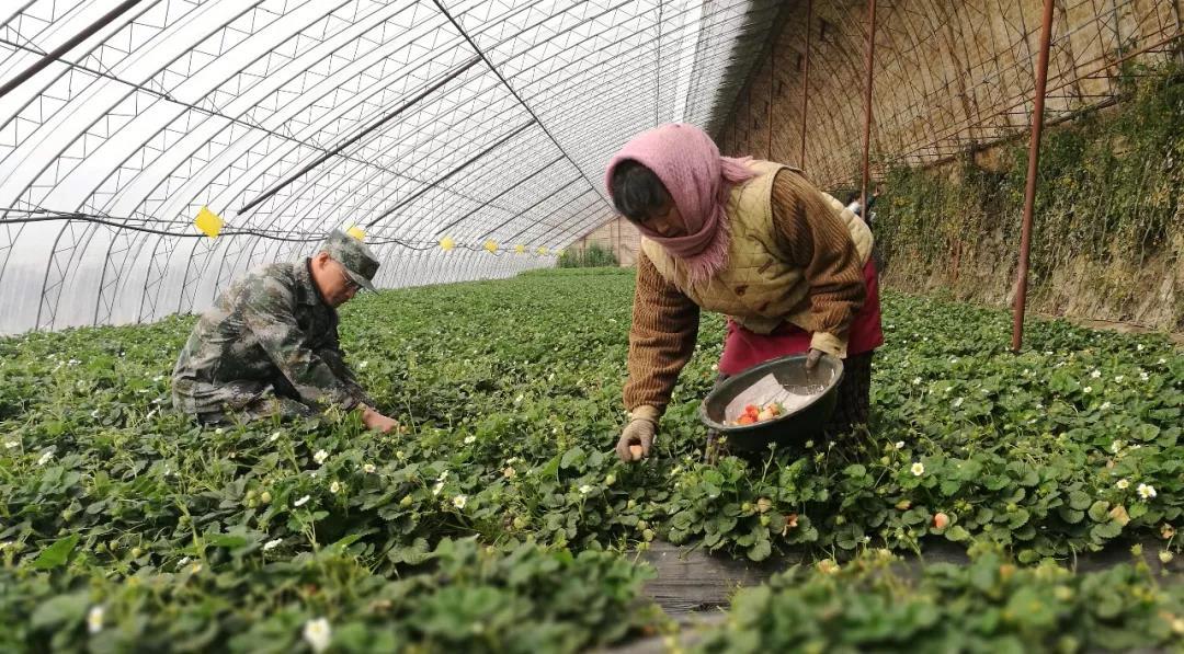 三农日报|我国农药包装或将巨变;农业大数据服务迎来融资高潮