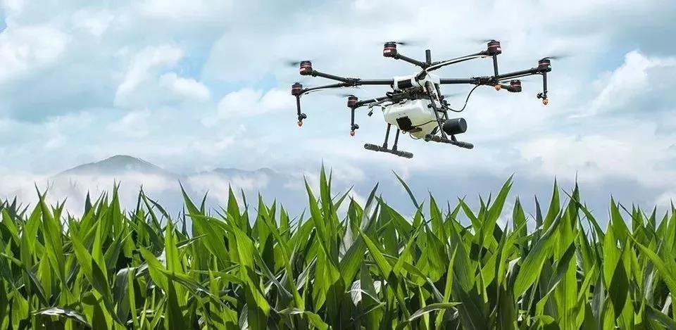 三农日报|业内人士:农化企业将面临大规模的倒闭潮;我国玉米生产迎来转折之年