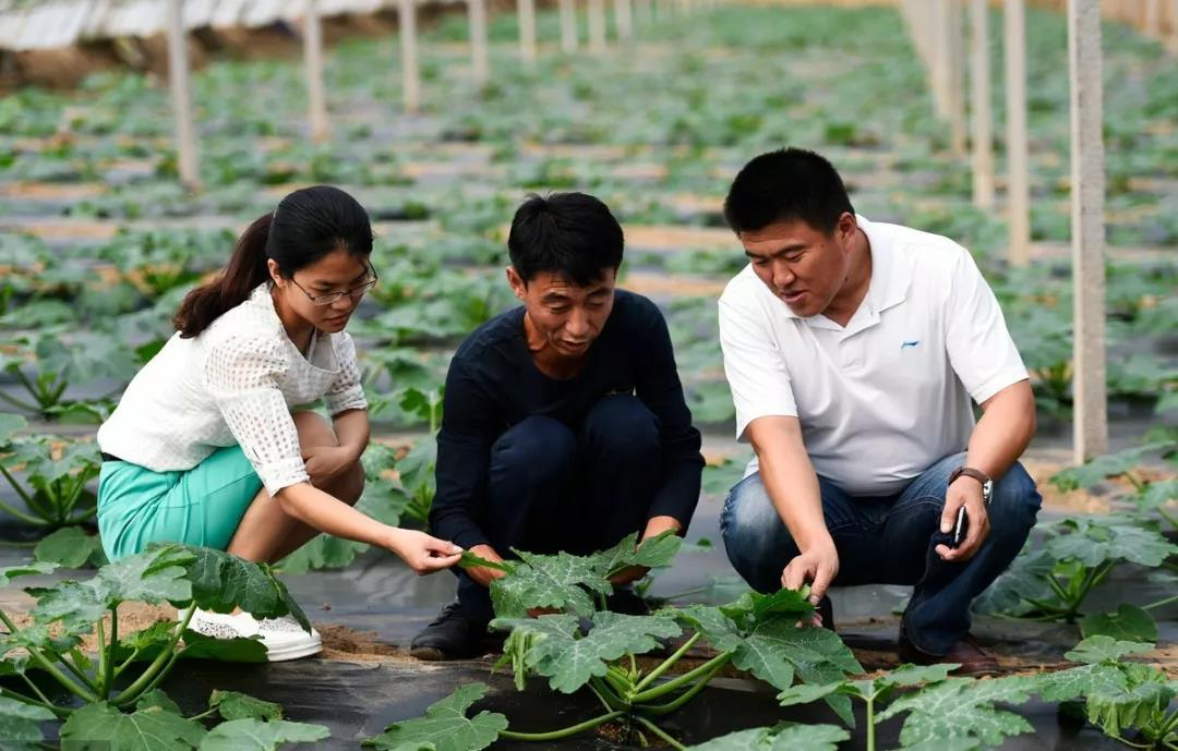 三农日报|政府工作报告:支持返乡入乡创业创新;我国数字农业迎新风口