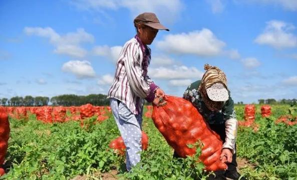 农业生产上11大农药使用问题,这些问题,你中了几个?