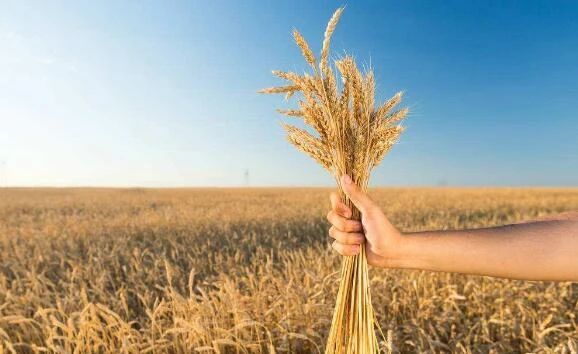 【深度分析】中国农业现状,你真得懂农业吗