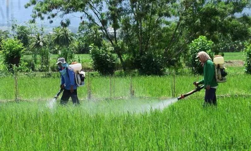 【深度分析】中国农业生产日益沦为化学农业