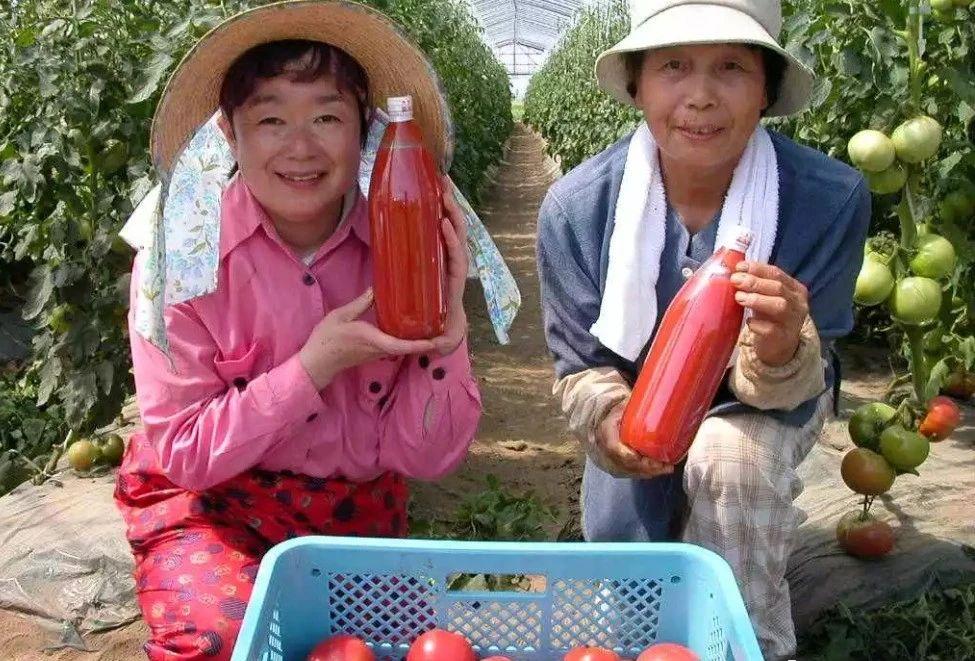 【国外农业】日本果农原来是这样给苹果树打药的!(附:日本苹果园考察实况)